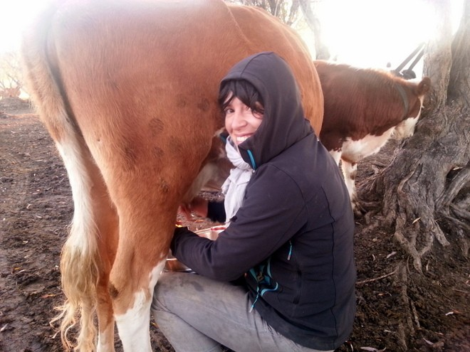 aline traite vache ranch workaway mongolie