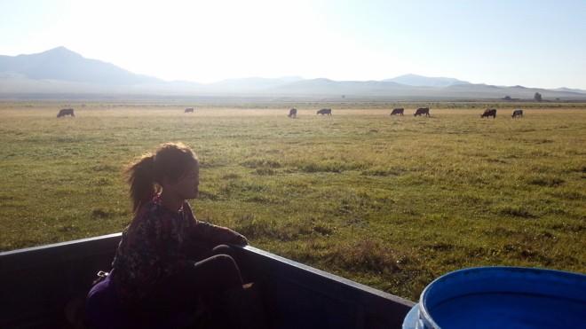 la liberte en mongolie