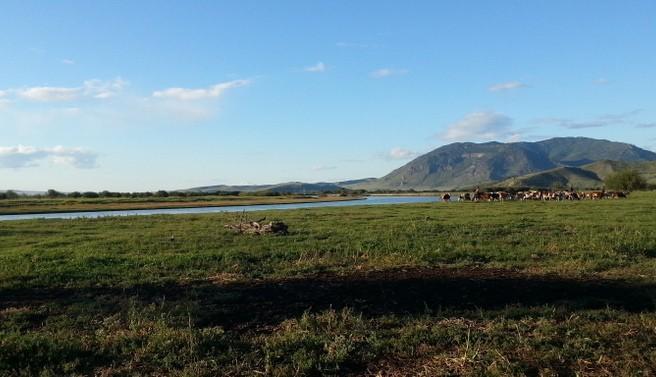 Workaway : 1 mois inoubliable dans un ranch en Mongolie