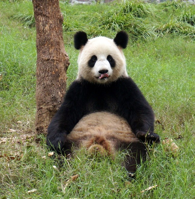 dujiangyan panda parc