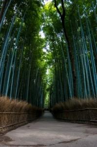 foret de bamboo voyage pas cher japon