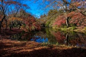 jardin botanique kyoto pas cher japon
