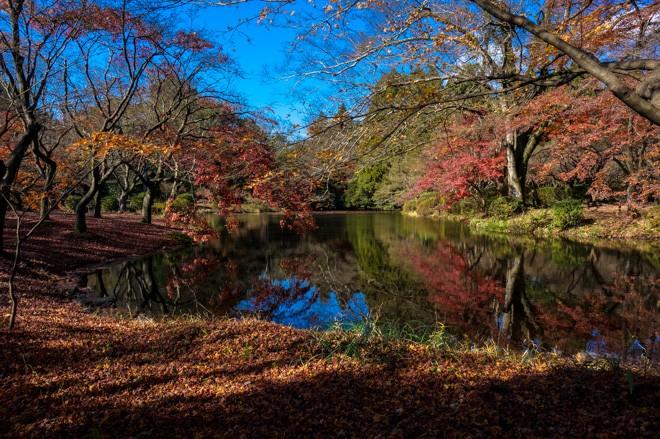 Comment voyager pas cher au japon for Jardin kyoto