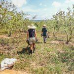 le monde a deux fertilisant bénévolat ferme malaisie