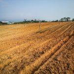 plantation de mais a la main volontariat malaisie