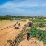 ramassage de manioc workaway malaisie