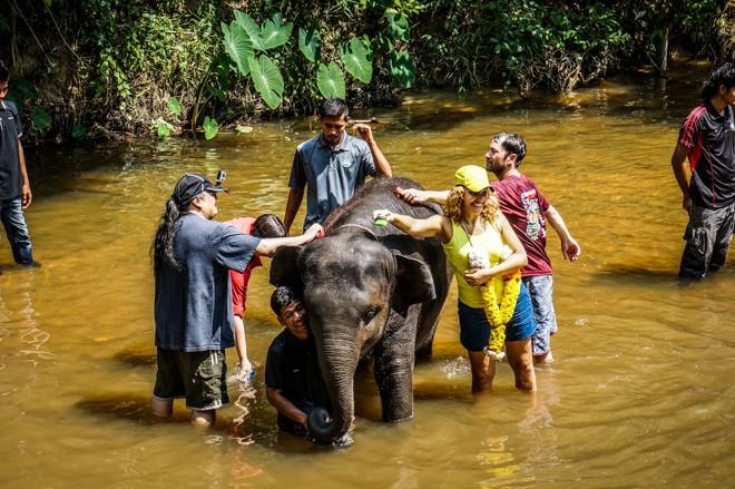 sanctuaire des éléphants lanchang volontariat malaisie