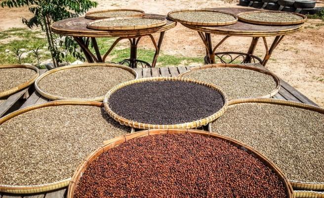 Un volontariat épicé: à la découverte du poivre bio de Kampot