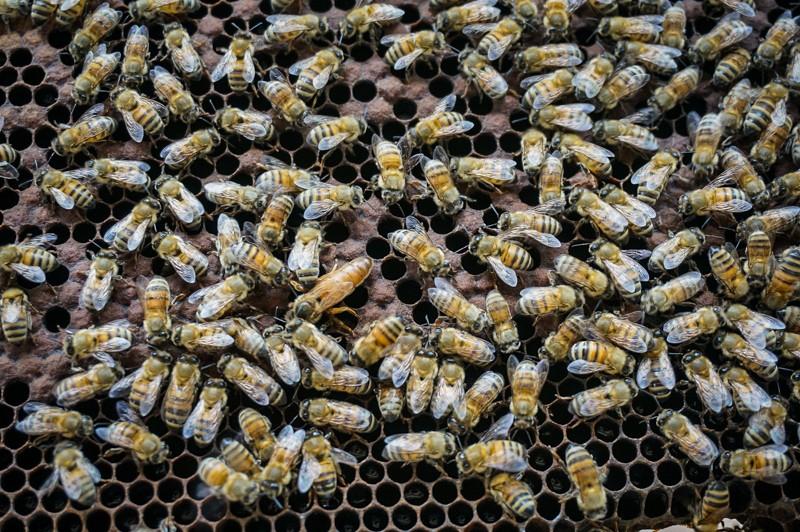 volontariat apiculture vietnam phu quoc