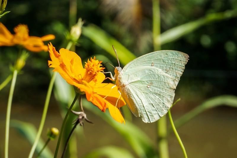 fleur papillon vietnam