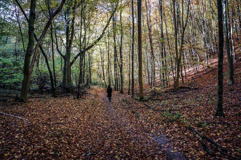 Aline isolée dans la forêt